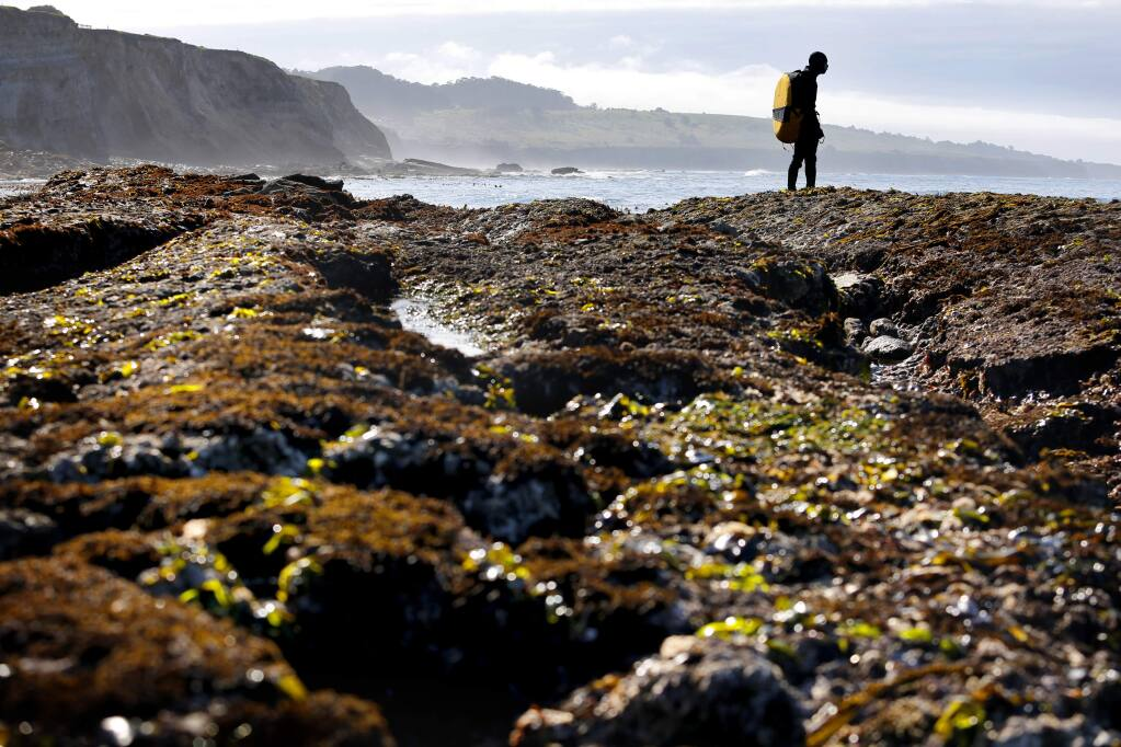 Ben Ko looks out across the water while abalone diving at Moat Creek in Point Arena, in 2016. At its December 2020 meeting, the California Fish and Game Commission extended the fishery closure for an additional five years to 2026. (BETH SCHLANKER/ The Press Democrat)