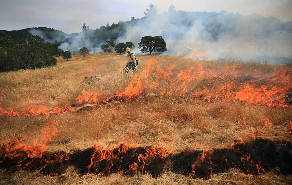 National Park Service firefighter Paul Beisner uses a drip torch to ignite sections of grass on fire and was part of more than two dozen firefighters from Cal Fire and Sonoma County fire departments to participate in control burn at Bouverie Preserve in Glen Ellen, Tuesday May 30, 2017 in Glen Ellen. Crews burned nearly 18 acres of grassland and oak savannah at the preserve. (Kent Porter / Press Democrat) 2017