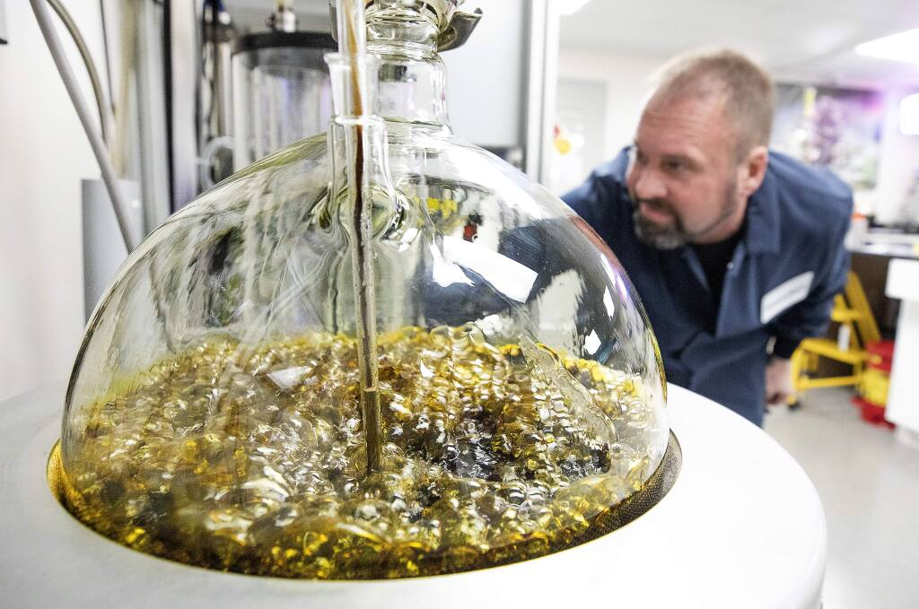 Stefan Shumaker oversees the bubbling cannabis oil as it moves through the process of extracting impurities at CannaCraft in Santa Rosa on Thursday. (photo by John Burgess/The Press Democrat)