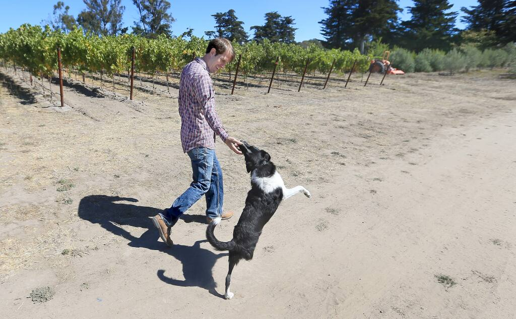 Nate Belden and his dog Friday take a walk through their Sonoma Mountain vineyard, Monday Sept. 15, 2014. Opposition has arisen by area residents, to Belden's plans to operate a winery and creamery on the 55 acre ranch, citing the damage to the rural feel of the neighborhood and the increased traffic on the narrow mountainous road. (Kent Porter / Press Democrat) 2014