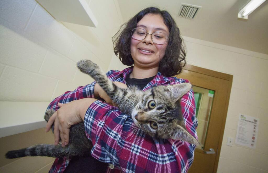 Thirteen-year-old Kolbe Anderson's volunteer job at Pets Lifeline is socializing the adoptable cats and kittens, familiarizing them with the human touch and presence. (Photos by Robbi Pengelly/Index-Tribune)
