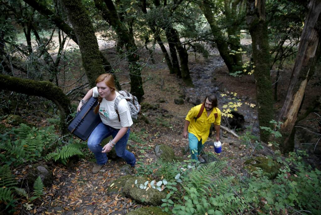 Sonoma State students Maya Hoholick and Jeff Johnson hike to complete water quality testing in Kelly Pond on the Fairfield Osborn Preserve in Penngrove on Wednesday, Aug. 6, 2014. (BETH SCHLANKER / The Press Democrat)