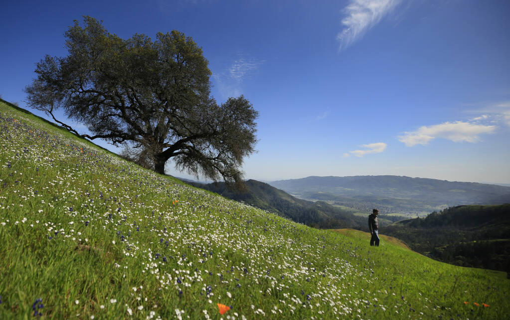 Sonoma County Regional Parks director Bert Whitaker takes in the beauty of the Fitzsimmons Ranch, a 200-acre addition to the Hood Mountain Regional Park near Kenwood, Friday, April 2, 2021. Background right is Sonoma Mountain.   (Kent Porter / The Press Democrat)