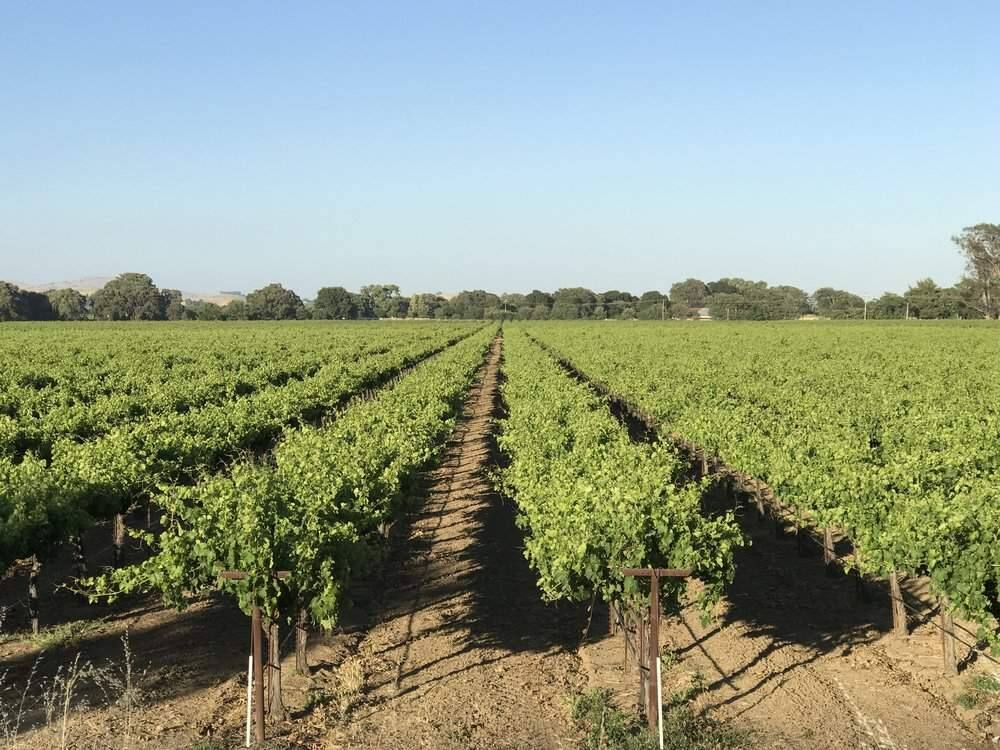 The Babcock family has been farming wine grapes in Solano County's Suisun Valley appellation for four generations. (courtesy of Suisun Creek Winery)