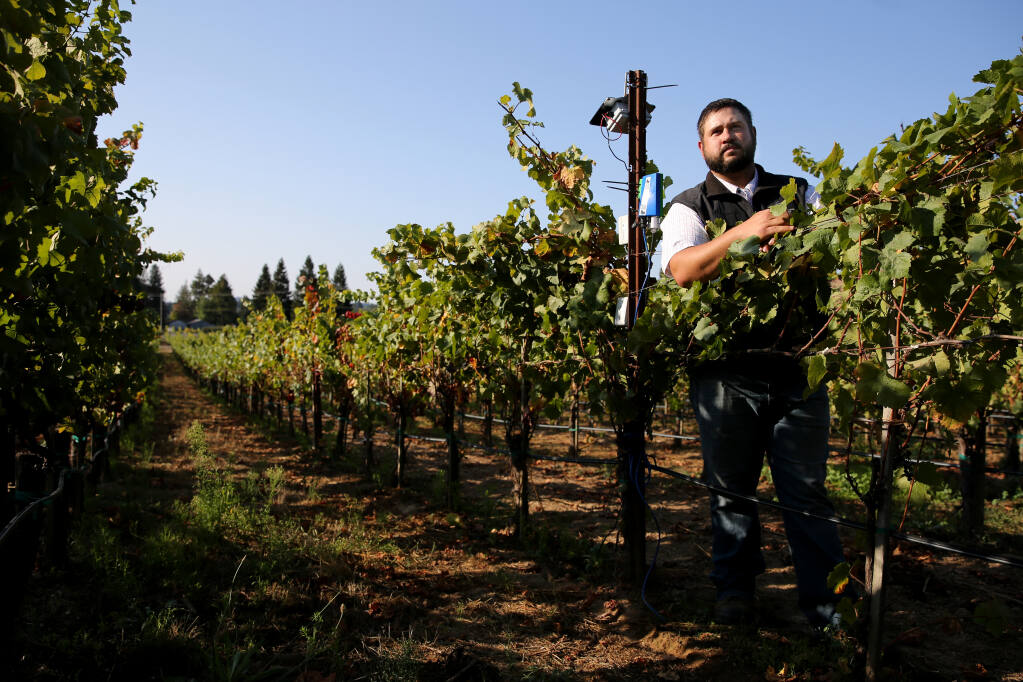 Riggs Lokka, assistant vineyard manager, stands next to a Agrology monitor located among the pinot noir grapes at Emeritus Vineyards in Sebastopol on Tuesday, Sept. 21, 2021. (Beth Schlanker / The Press Democrat)