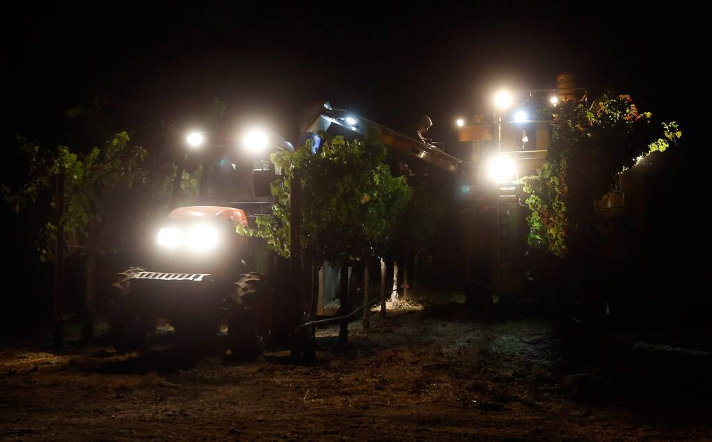 A Munselle Vineyards crew uses a mechanical harvester to pick cabernet sauvignon grapes through the night at Stone Ranch vineyard in Alexander Valley, in Geyserville, California on Wednesday, September 28, 2016. (Alvin Jornada / The Press Democrat)