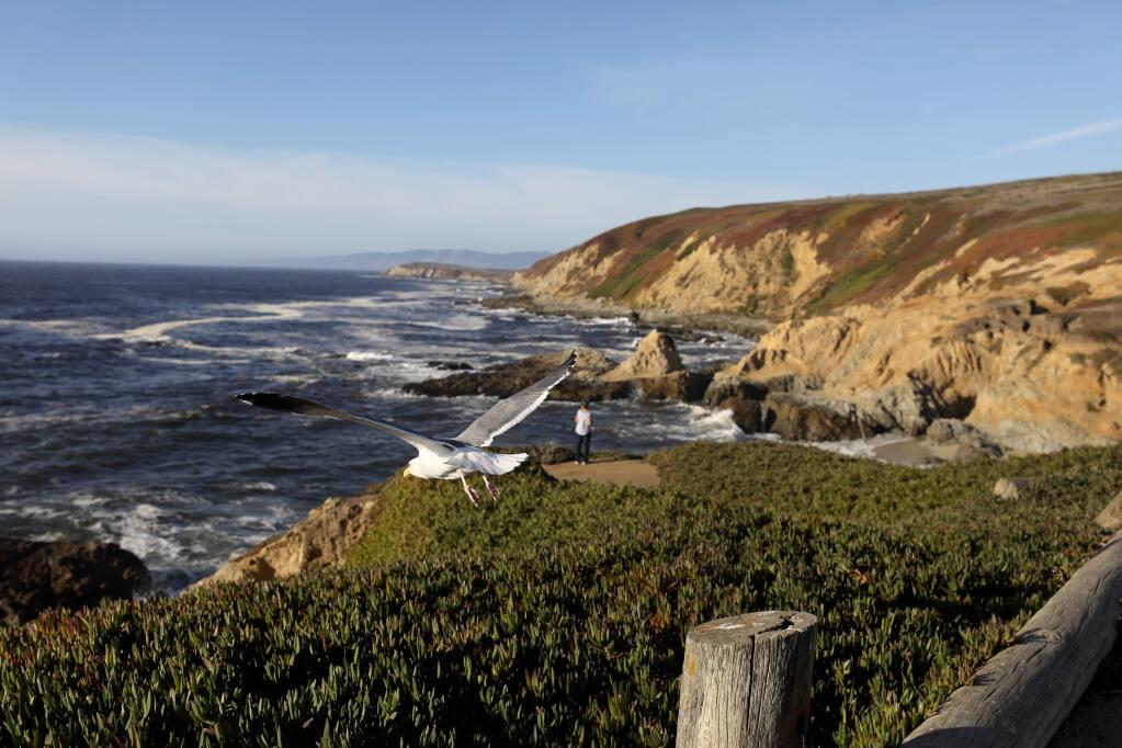 A seagull takes flight at Bodega Head in Bodega Bay on Monday, November 18, 2019. (BETH SCHLANKER/ The Press Democrat)