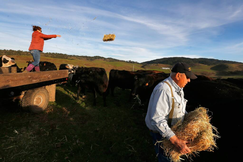 Rich Grossi, 77, with help from his granddaughter Ashley Arndt, left, feed hay to some of Grossi's cattle, that are being raised for beef, at the Historic M Ranch on Point Reyes National Seashore near Inverness, California on Tuesday, Nov. 21, 2017. The Grossi family has farmed on Point Reyes for six generations, since purchasing the ranch in 1939. (Alvin Jornada/The Press Democrat, 2017)