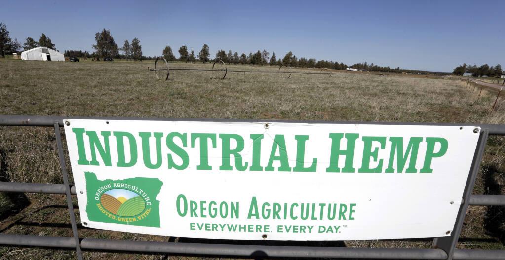 An industrial hemp farm near Sisters, Oregon. (DON RYAN / Associated Press, 2018)