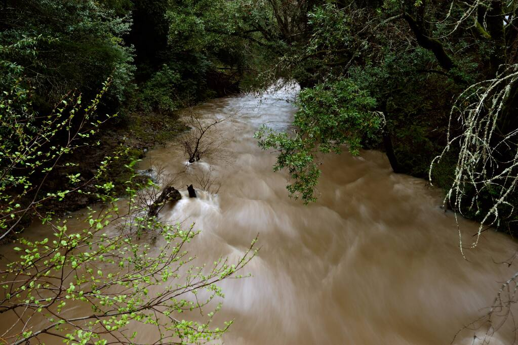 Recent rain storms raise the level of Mark West Creek as the current rushes by Mark West Springs Road in Santa Rosa on Saturday, March 12, 2016. (Alvin Jornada / The Press Democrat)