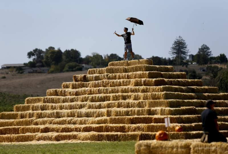 Climbing the hay pyramid at the Santa Rosa Pumpkin Patch is fun for everyone, no matter how old or young you are.