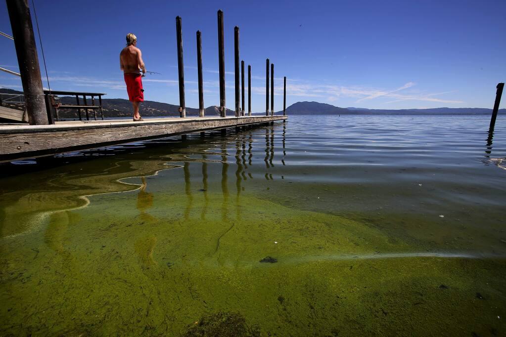 A blue-green algae bloom hugs the shore at Keeling Park in Nice in Lake County. (JOHN BURGESS/ PD FILE, 2013)