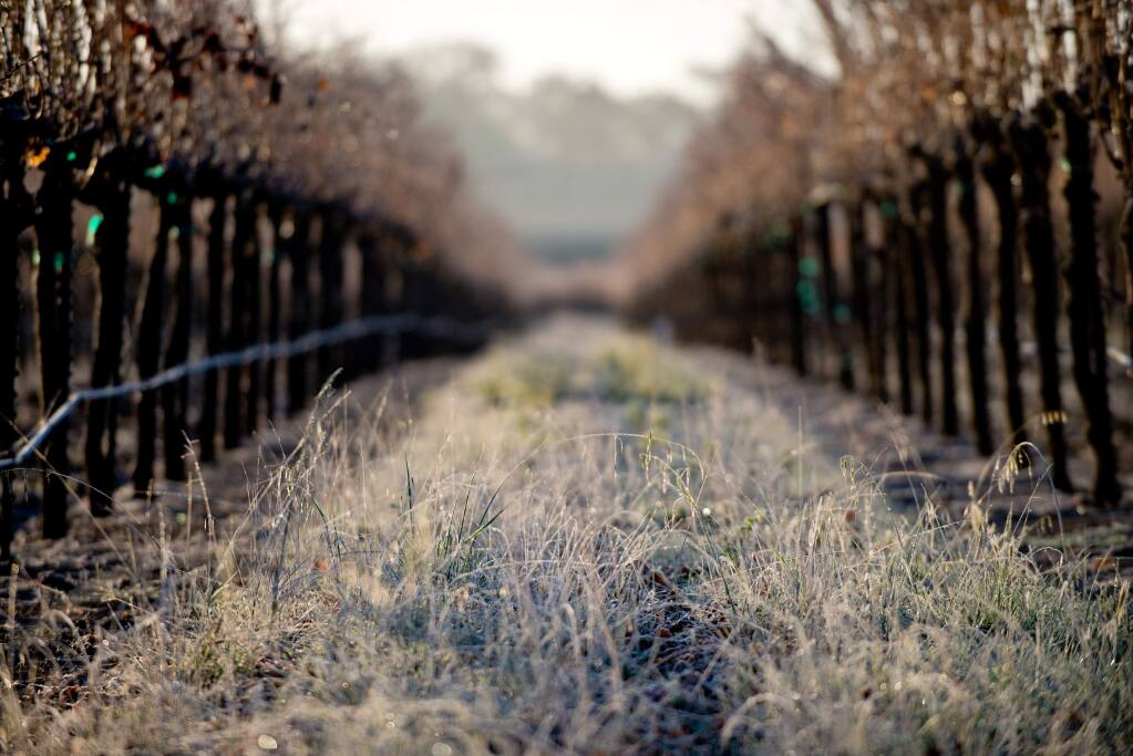 Frost covers grass and vines of a vineyard off of Grant Avenue in Healdsburg in 2013. (PD FILE)
