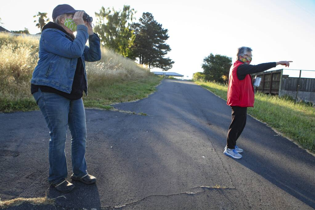 Petaluma, CA, USA. Tuesday, May 05, 2020._ Wildlife enthusiasts Susan Kirks and Sue Sullivan walk around a westside Petaluma neighborhood on Paula Lane where they spotted deer foraging and wild turkey.(CRISSY PASCUAL/ARGUS-COURIER STAFF)