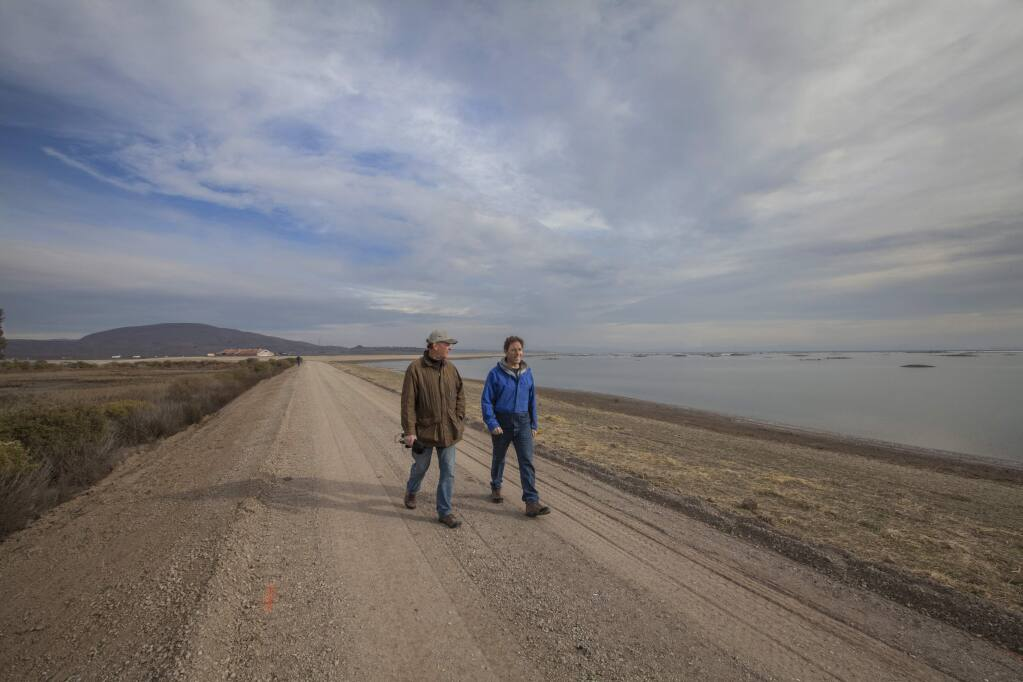 Marc Holmes of the Bay Institute (left) and Julian Meisel of the Sonoma Land Trust explore the reclamation projects at Sears Point. The 10-year-old Sonoma Baylands acreage is at left; the newborn Sears Point wetlands is on the right. In October, the Sonoma Land Trust breached the levee holding back water from the bay. Now, the tidal basin has been restored, and running alongside it will be a 2.5-mile addition to the San Francisco Bay Trail. (Photos by Robbi Pengelly/Index-Tribune)