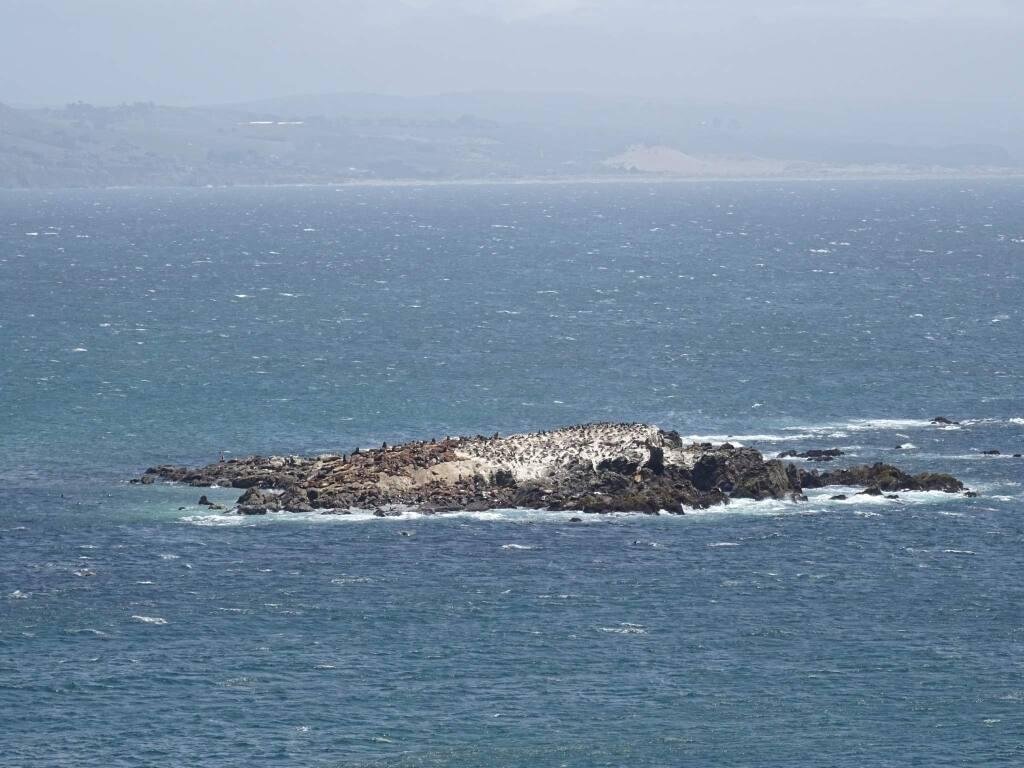 Bodega Rock, as seen from Bodega Head in May. (Bruce Baird / Press Democrat)