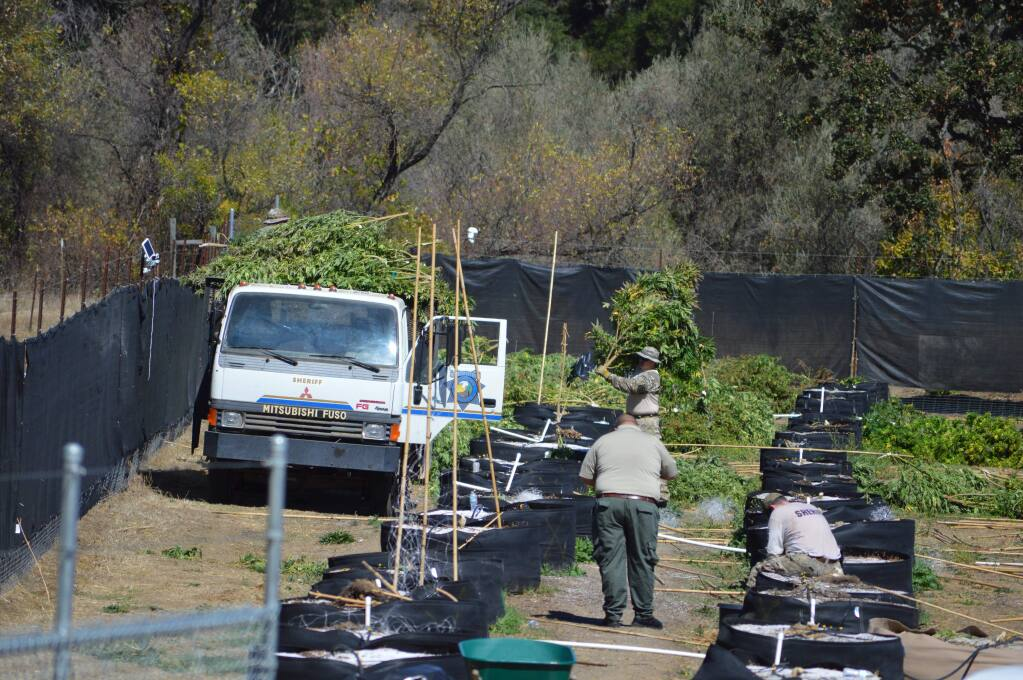Mendocino County sheriff's deputies raid the Pinoleville tribe's marijuana-growing operation near Ukiah on Tuesday, Sept. 22, 2015.