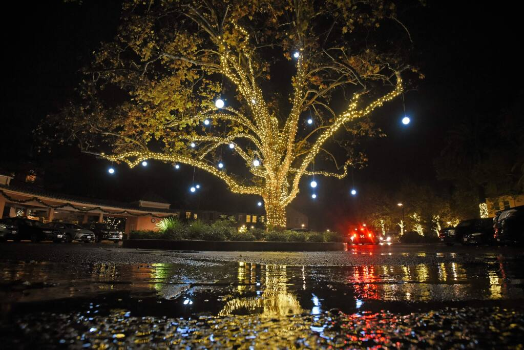 The 100-year-old sycamore lit up under a light rain that kept most of the activities indoors during the annual Tree Lighting Ceremony held Saturday at the Fairmont Sonoma Mission Inn & Spa in Sonoma, California. November 30, 2019.(Photo: Erik Castro/for The Press Democrat)