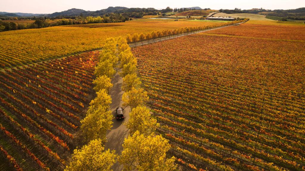 A visitor to Stonestreet Winery makes their way thropugh a full display of fall colors in the Alexander Valley near Jimtown north of Headldsburg. (Chad Surmick / The Press Democrat)