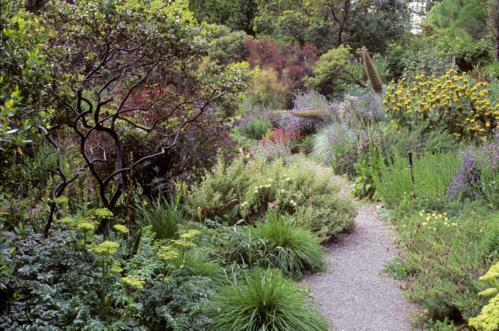 """A gravel path meanders through a demonstration garden of drought-tolerant plants, in this image from the recent book, """"Gardening in Summer-Dry Climates: Plants for a Lush, Water-Conscious Landscape,"""" by Nora Harlow. (Saxon Holt)"""
