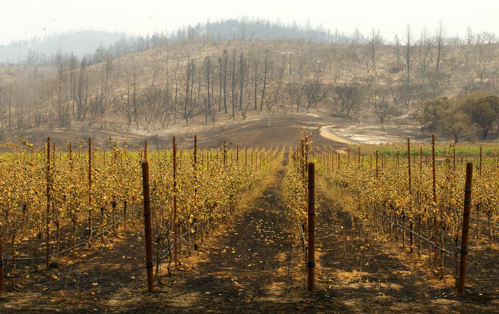 A burned vineyard shows the path of the Glass fire as it moved south from Hood Mountain and across to threaten Oakmont homes along Highway 12 on Tuesday, Sept. 29, 2020. (Photo by John Burgess/The Press Democrat)