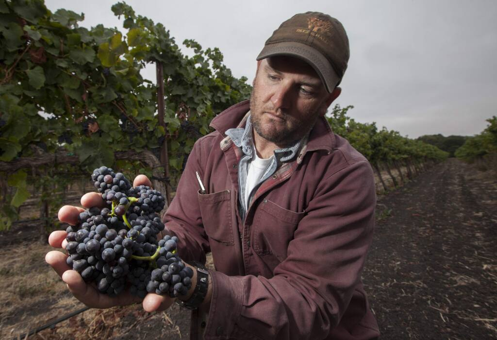 Ned Hill, proprietor of La Prenda Vineyard Management, holds pinot noir grapes from one of his vineyards in 2015. (Robbi Pengelly/Index-Tribune)