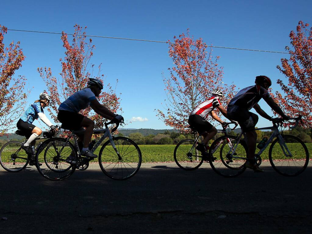 A group of cyclists ride past a vineyard on West Dry Creek Road, west of Healdsburg, on Wednesday afternoon, October 19, 2011.
