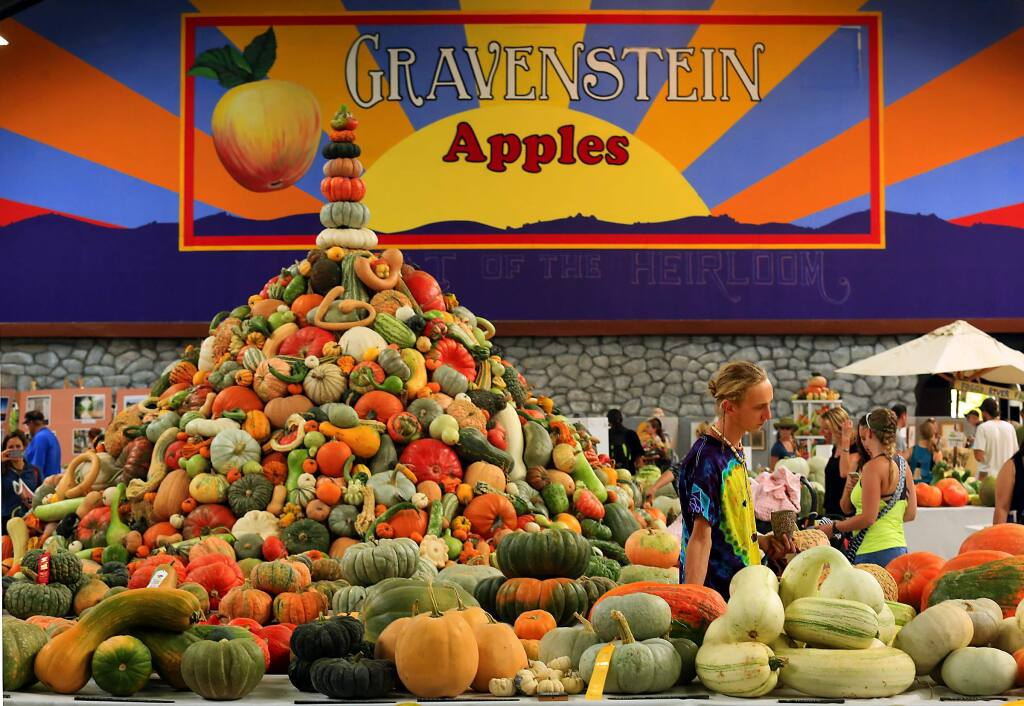 France Lebow of Orange County walks through a display with hundreds of varieties of squash at the seventh annual National Heirloom Expo. (photo by John Burgess/The Press Democrat)