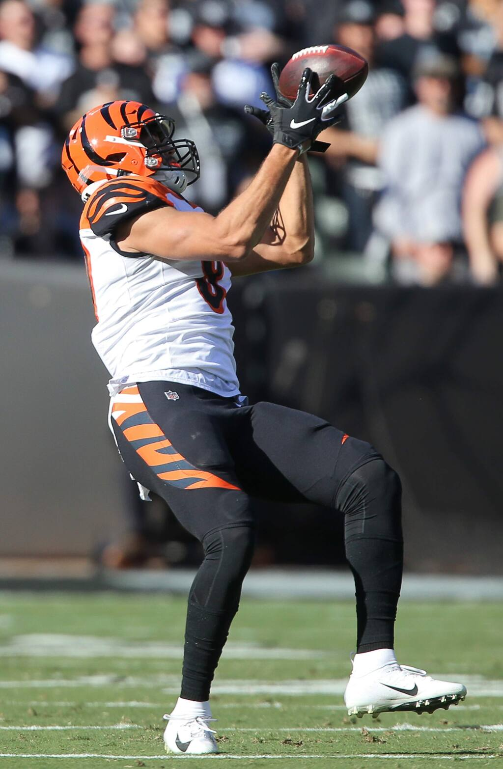 Cincinnati Bengals tight end C.J. Uzomah bobbles the ball during a catch against the Oakland Raiders, during their game in Oakland on Sunday, November 17, 2019. (Christopher Chung/ The Press Democrat)