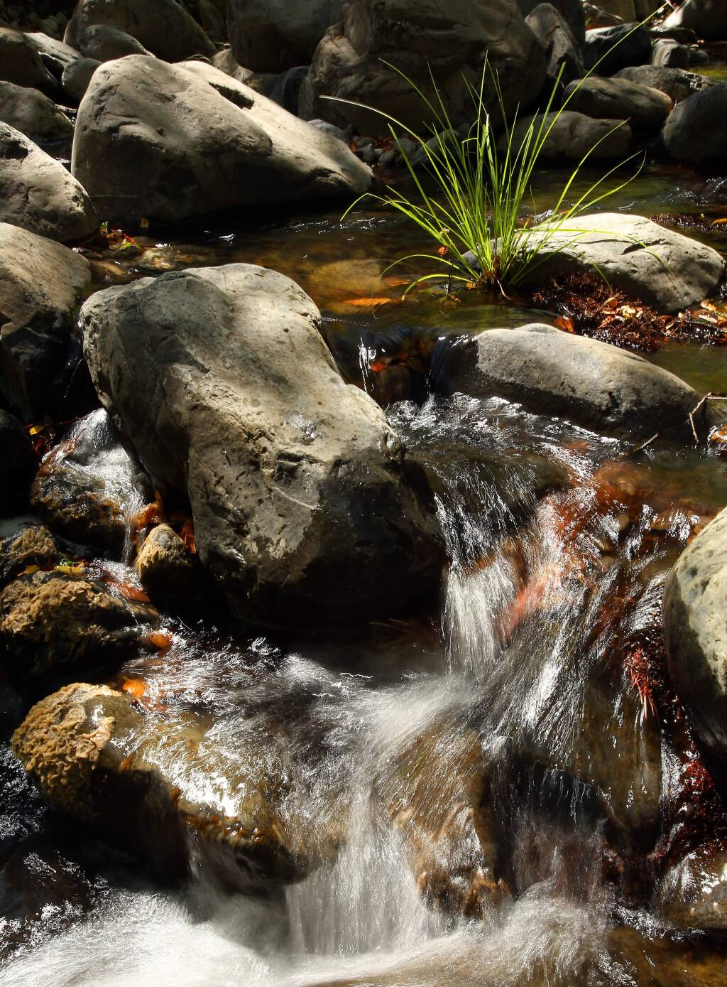 Water flows down Carriger Creek in Sonoma on Wednesday, September 3, 2014. (Christopher Chung/ The Press Democrat)