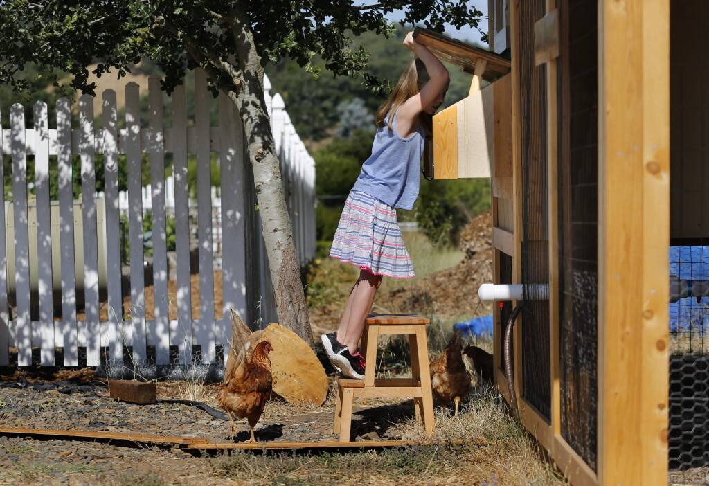 Grace Anne Doyle, 9, a talented young singer dealing with cerebral palsy, looks for eggs in the chicken coop in her backyard in Santa Rosa, on Thursday, July 7, 2016. (BETH SCHLANKER/ The Press Democrat)