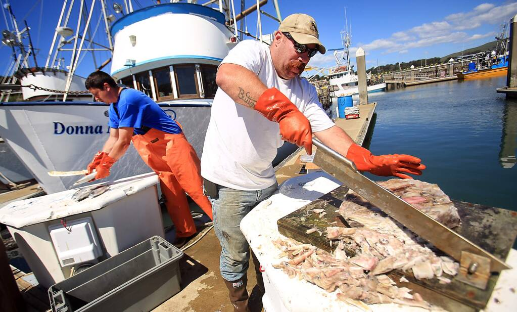 Deckhand Sean Amoroso, right and skipper Matt Anello cut frozen squid and mackerel as they prepare to head out to catch crab, Tuesday March 29, 2016 in Bodega Bay. (Kent Porter / Press Democrat) 2016