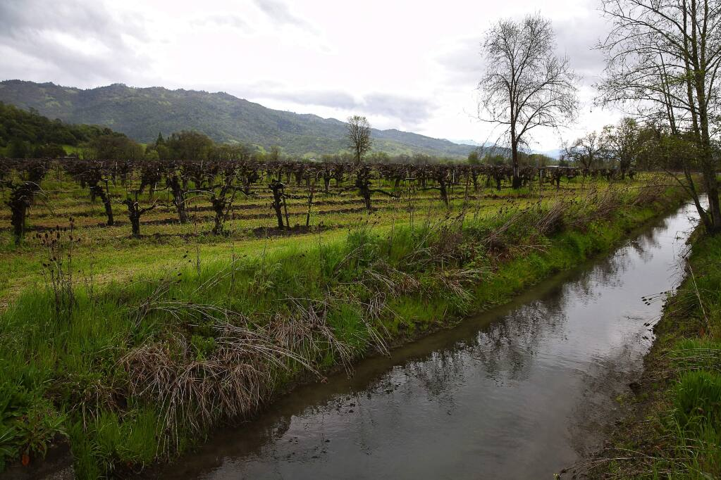Water travels past a vineyard along the East Canal downstream from the Potter Valley Powerhouse, in Potter Valley on Thursday, April 6, 2017. (Christopher Chung/ The Press Democrat)