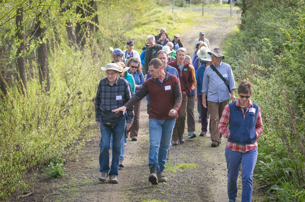 A group of hikers make their way along the newly opened Discovery Trail along the Laguna de Santa Rosa, in Santa Rosa, Calif. Saturday, February 27, 2016. Laguna Foundation officials led a guided hike sharing stories of the restoration effort.