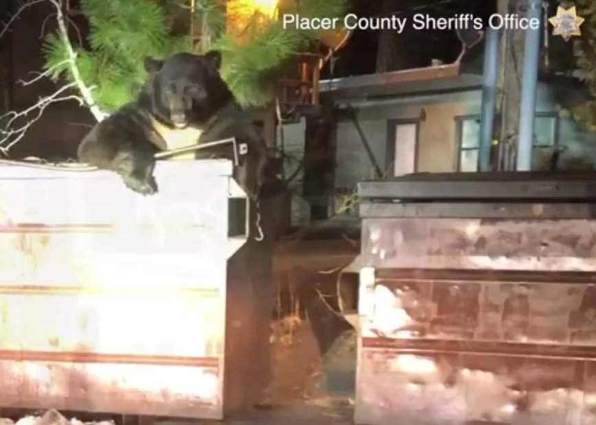 A screenshot from video posted to Facebook by the Placer County Sheriff's Office showing a bear in a dumpster in Kings Beach, Lake Tahoe, California. (PLACER COUNTY SHERIFF'S OFFICE)