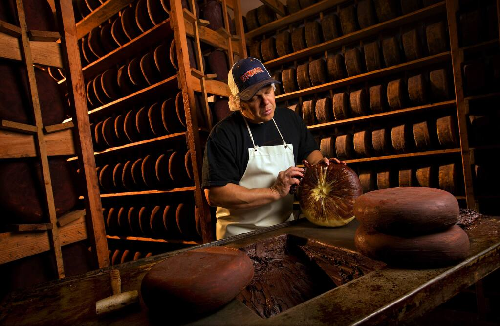 Gabriel Luddy coats a dry jack cheese wheel with cocoa in the aging room at Vella Cheese in Sonoma. Luddy's great-grandfather started the company 77 years ago and the family continues to make the cheese with the same methods. (photo by John Burgess/The Press Democrat)