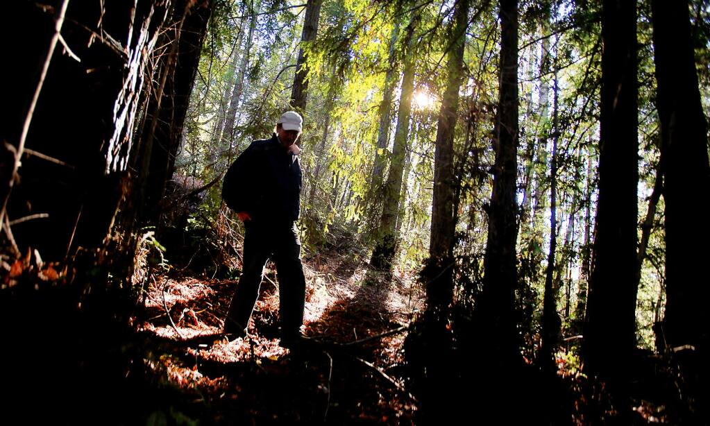 Chris Kelly, California program director of the Conservation Fund, tours a redwood grove cut decades ago at the Preservation Ranch near Annapolis, Tuesday, Dec. 29, 2015. (Kent Porter / Press Democrat)