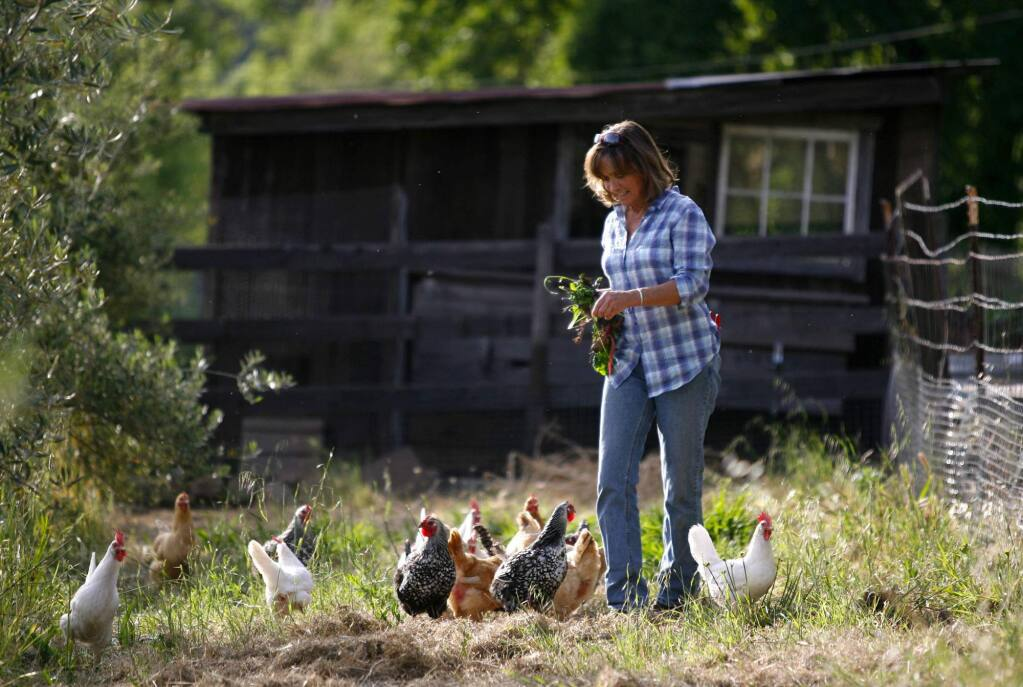 6/9/2010: D6:PC: Alexa Wood feeds the chickens before collecting their eggs at Beltane Ranch in Glen Ellen. Wood uses the eggs to cook breakfast for her customers that stay at the B & B. She also has a garden filled with vegetables and fruits which she uses as well