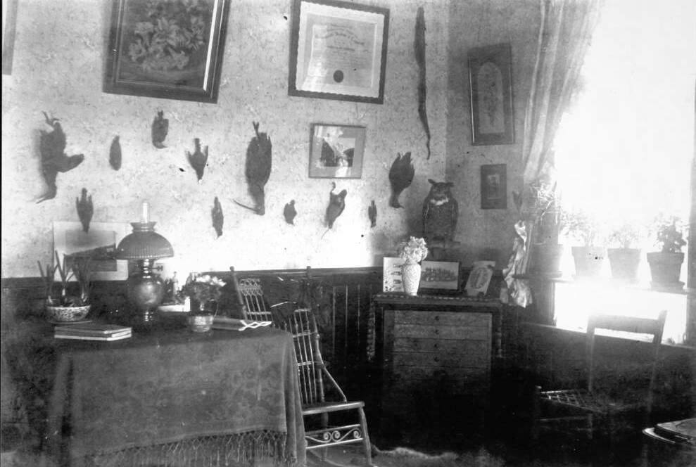 An interior view of Flora and Hamilton Otis' home in Cazadero shows hunting spoils upon the walls, circa 1902. (Sonoma County Library)