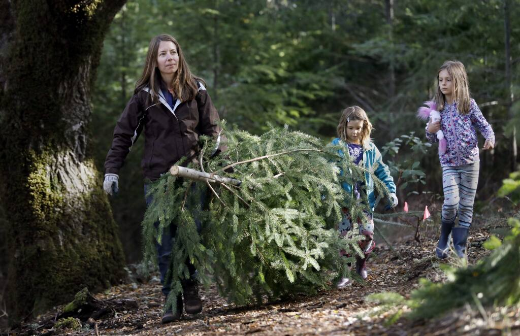 Melissa DeForest hauls out her recently cut Douglas fir tree with her daughters Avery, 5, and Kaitlyn, 7, as part of 'The Great Charlie Brown Christmas Tree Hunt' hosted by LandPaths at Riddell Preserve west of Healdsburg on Sunday, December 2, 2018. (BETH SCHLANKER/ The Press Democrat)