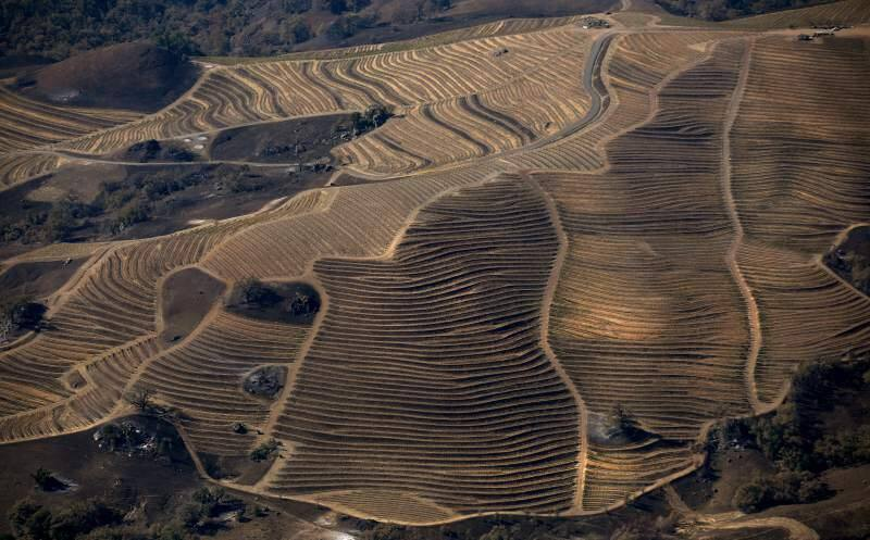 Vineyards sandwiched between Geysers and Pine Flat roads are charred Monday, Nov. 4, 2019, because of the Kincade fire. (Kent Porter / The Press Democrat) 2019