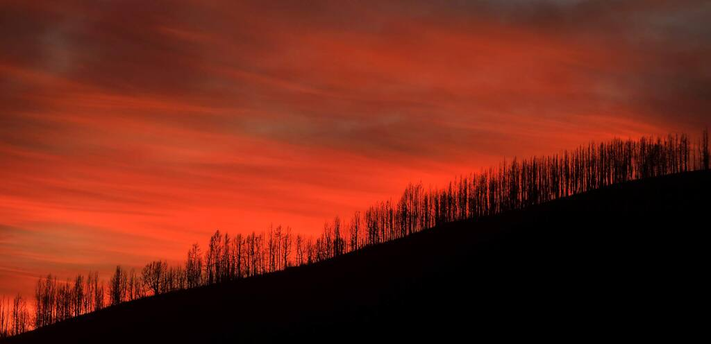 A nuclear sunset, highlights charred douglas fir and sugar pines Wednesday, Dec. 12, 2018 in the Mendocino National Forest. (Kent Porter / The Press Democrat) 2018