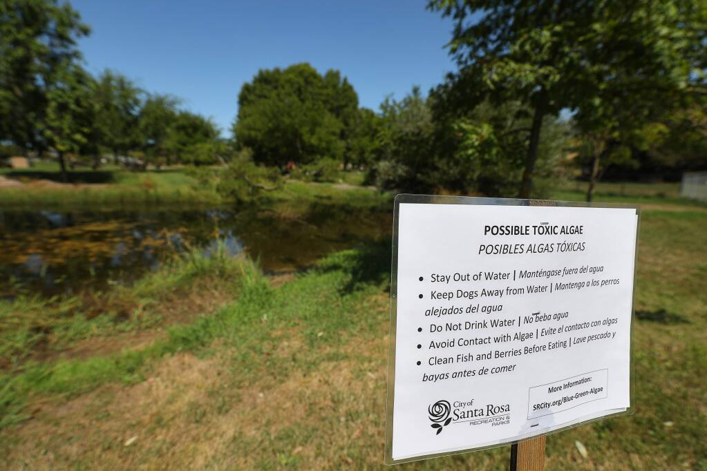 Signs posted by the City of Santa Rosa warn about the possible presence of toxic algae in the creek ponds in Rincon Valley Community Park in Santa Rosa on Tuesday, Sept. 10, 2019. (CHRISTOPHER CHUNG/ PD)