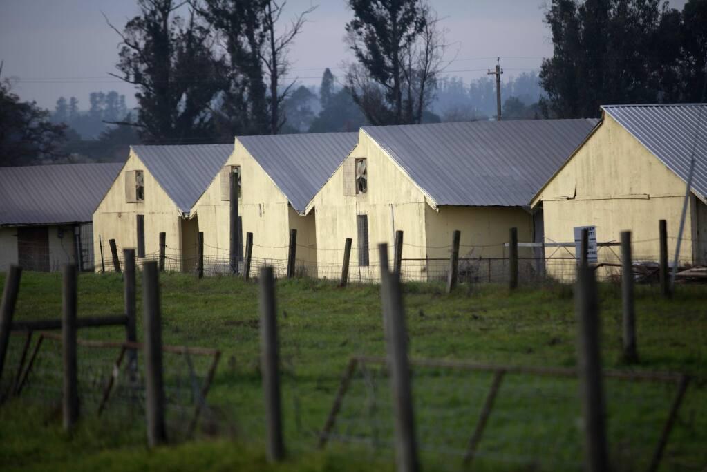 Petaluma Farms on Thursday, January 8, 2015 in Petaluma, California . (BETH SCHLANKER/ The Press Democrat)