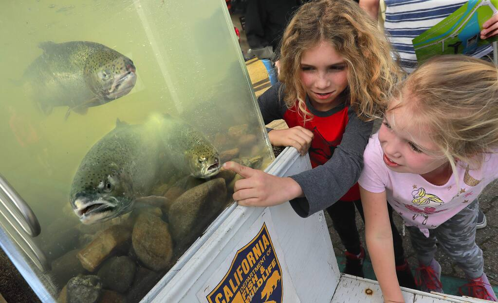 Ethan, 9, and Giuliana Bowars, 6, of Santa Rosa get up close and personal with steelhead trout at the Milt Brandt Visitors Center at Lake Sonoma on Saturday. (photo by John Burgess/The Press Democrat)