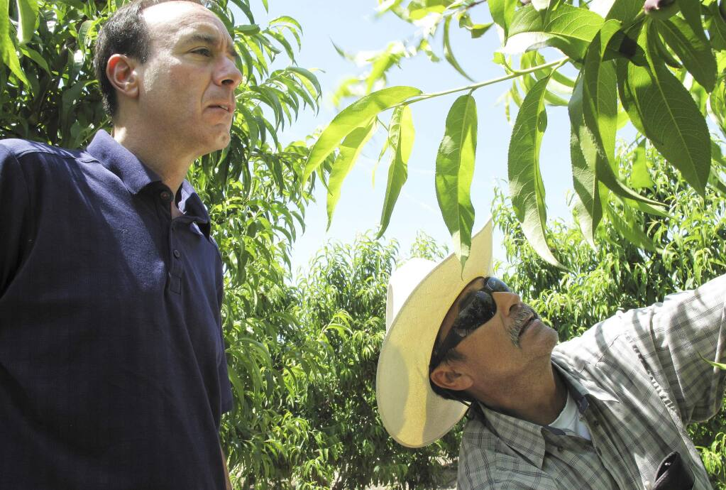 "FILE - In this April 29, 2014 file photo, Dan Gerawan, owner of Gerawan Farming, Inc., left, talks with crew boss Jose Cabello in a nectarine orchard near Sanger, Calif. The California Supreme Court is expected to decide Monday, Nov. 27, 2017, whether a law allowing the state to order unions and farming companies to reach binding contracts is unconstitutional. ""This is literally government stepping in and determining the wages and working conditions of a business and enforcing it on the employer and employees without any say whatsoever,"" said Gerawan. (AP Photo/Scott Smith, File)"