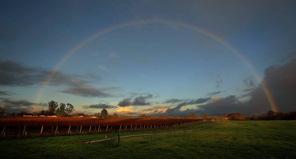 (FILE PHOTO) A fall frost burns vineyard and early pasture growth as a storm crosses over Starr Road in Windsor, Thursday, Nov. 29, 2018. (Kent Porter / The Press Democrat) 2018