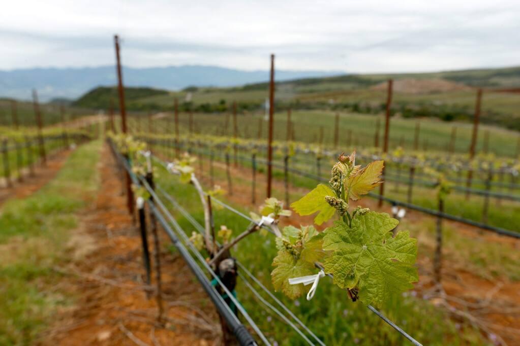 Stagecoach Vineyards near Napa, California, on Thursday, April 6, 2017. (Alvin Jornada / The Press Democrat)