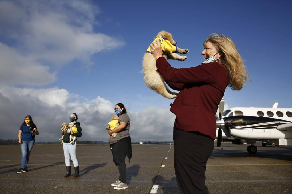 Paige Mazzoni, CEO of Canine Companions for Independence, holds a puppy along with other staff members before the dogs depart on private planes at the Charles M. Schulz–Sonoma County Airport in Santa Rosa, California on Tuesday, May 12, 2020. (BETH SCHLANKER/ The Press Democrat)