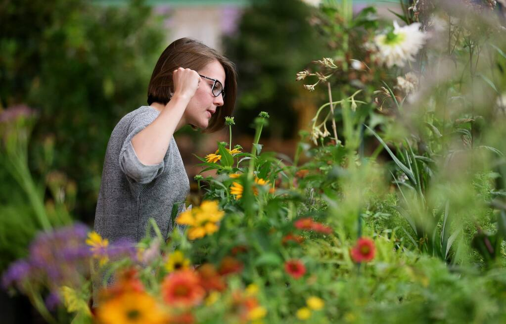 Jamie Cook looks over a selection of flowers for sale during the Fair Flower Show Plant Sale, at the Sonoma County Fairgrounds Hall of Flowers in Santa Rosa on Monday, August 12, 2019. (Christopher Chung/ The Press Democrat)